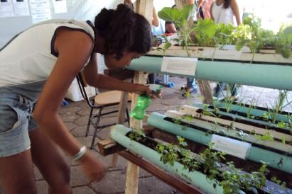 Ecologia no festival