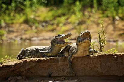 Pantanal (MT)