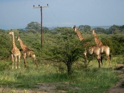 Safári fotográfico na África do Sul